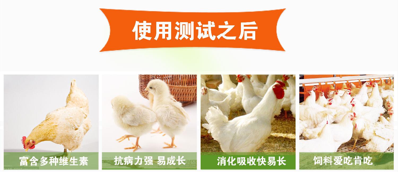 肉鸡安全饲料配置原则