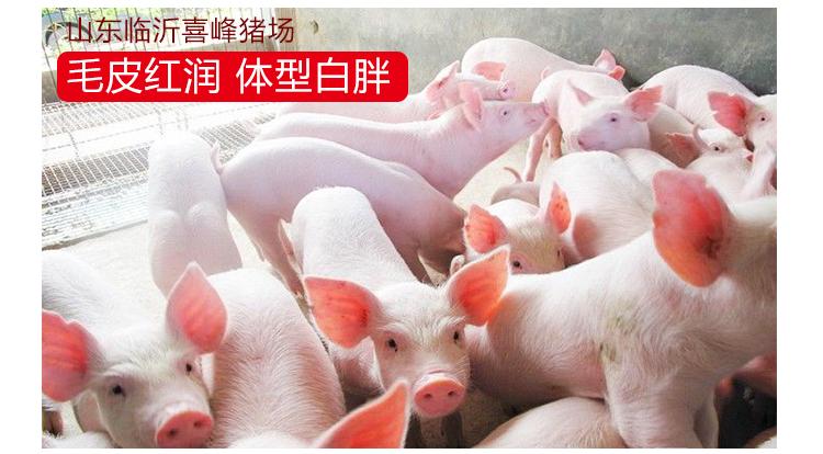 猪用维生素预混料